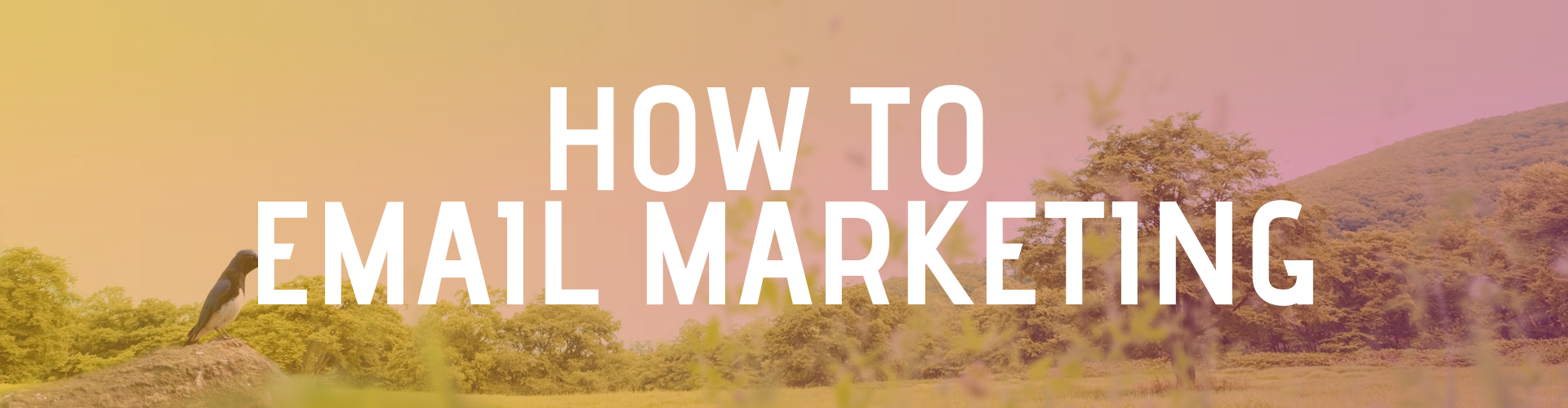 How To – Email Marketing
